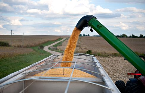 U.S. Corn Acres Seen Jumping to 75-Year High
