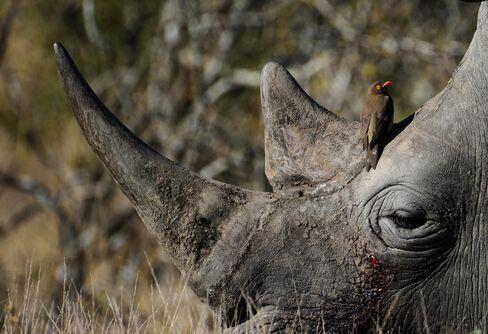 Rhino at Kruger National Park