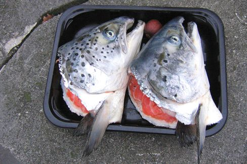 Fish Heads as Possible Fuel