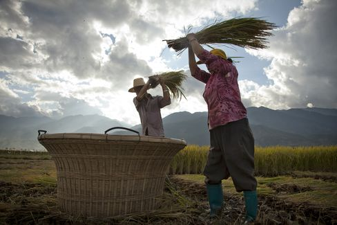 Crop Harvest in China