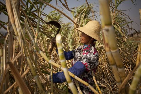 Sugar Harvest in China Seen Jumping on Weather, Paring Imports