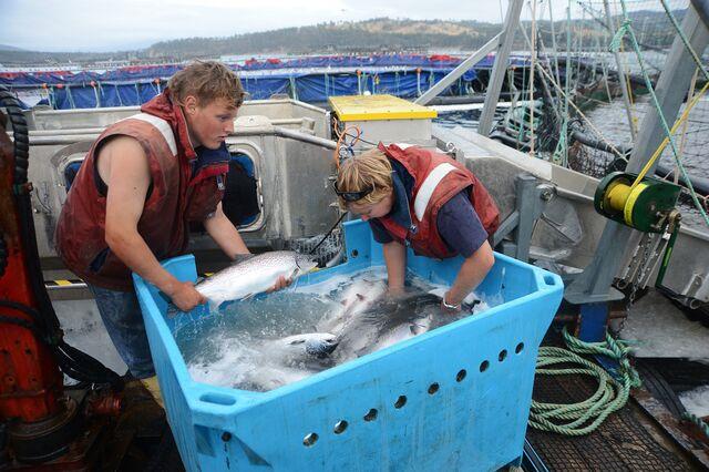 Is peak salmon threatening your sushi fix? Photographer: Carla Gottgens/Bloomberg