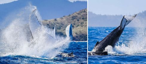 Humpback whales gave the sailors a