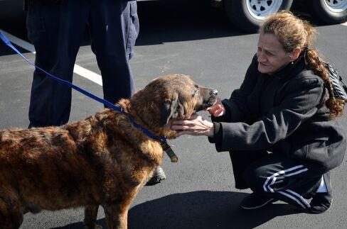 Staten Island Animal Rescue