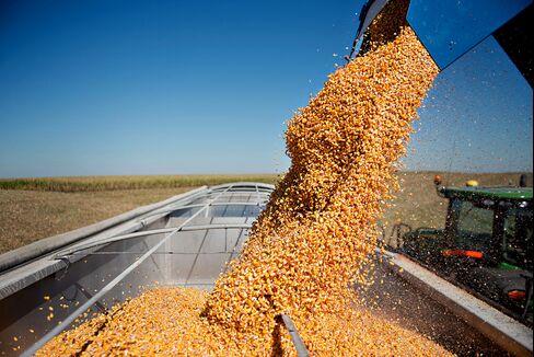 Ethanol Going Ugly Turns Bush Plan to Obama Test