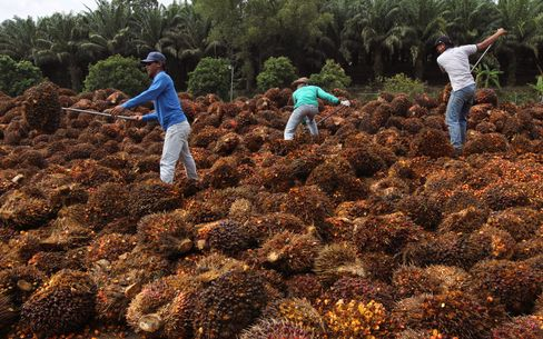 Palm Drops to Lowest Since 2009 on Record Global Stockpiles
