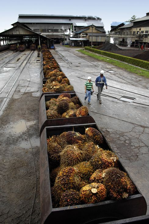 Malaysian Palm-Oil Refiners Urge Reform to Counter Indonesia