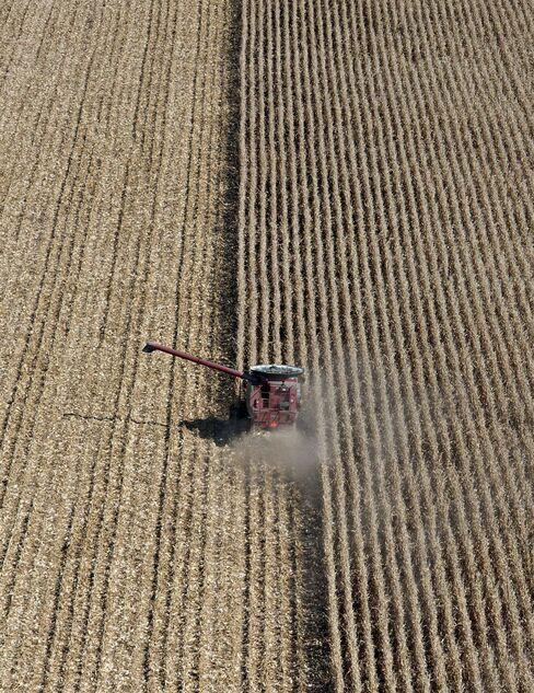 Rising Corn Acreage Seen Failing to Meet U.S. Feed