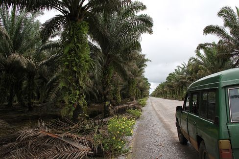 Palm trees grow in Sarawak, Malaysia. Photographer: Daniel Ten Kate/Bloomber