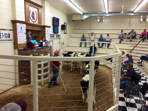 Greenville Livestock Auction