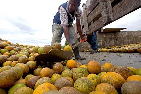 FDA Halts Orange Juice Imports to Test for Prohibited Fungic