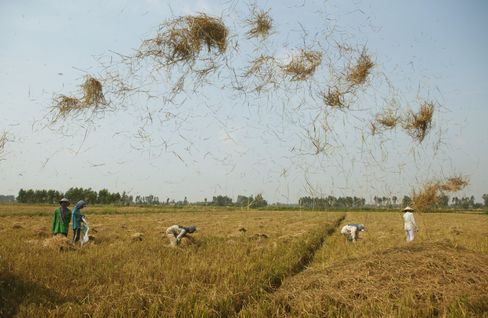 Vietnam May Release Rice Stockpiles to Cool Local Prices