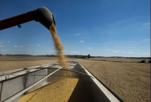 Record Soy Harvest Forecast