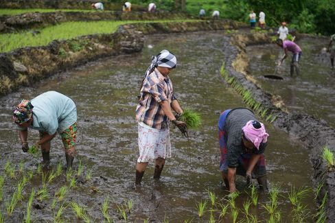 Crop Planting in India Seen Gathering Pace as Monsoon Revives