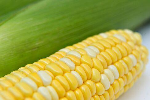 Corn Falls Most Since November
