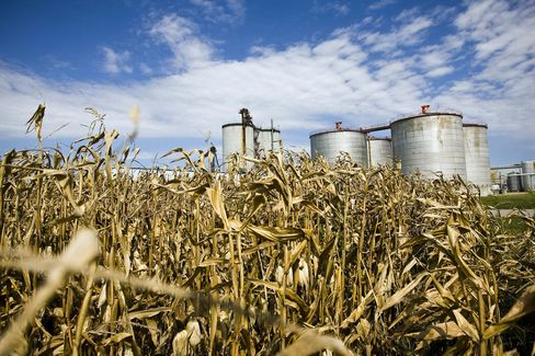 EPA Rejects Requests to Ease U.S. Corn-Based Ethanol Mandate