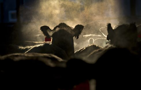 Pink Slime No Brake to Beef Rally as Herd Contracts