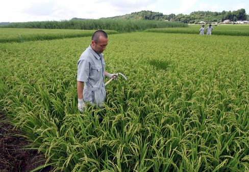 Japan Revives Rice Futures Trade