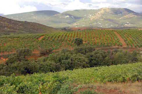 Terrassous Vineyards