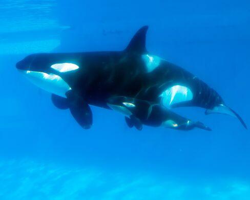 Blackstone Pitches SeaWorld at Premium After Snubbing Bids
