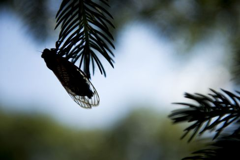 Twitter to Crowdfunding Make This Cicada Spawn Different: Tech