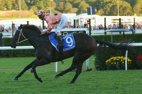 Black Caviar Will Be Retired After 25 Straight Horse Racing Wins