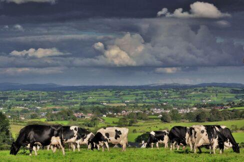 Cheese Maker Uses Pig and Cow Poop to Trim U.K. Energy Bills