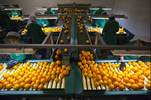 Naranjas Torres Fruit Processing Center