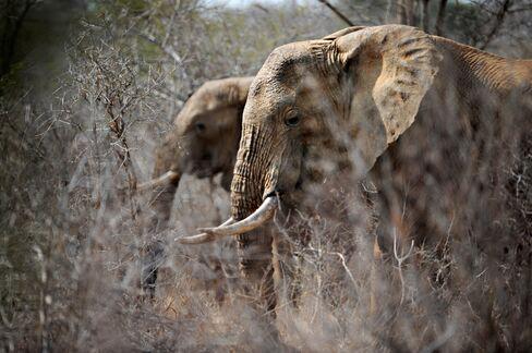 Elephant Populations