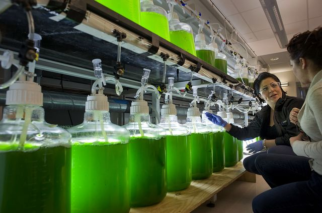 More research on algae, less cash.