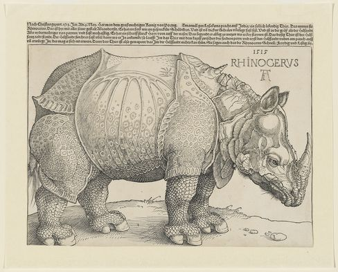 'The Rhinoceros'