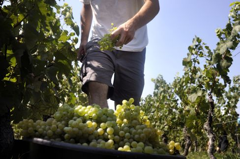 Burgundy Wine Area Hit by Hail Pounding Pommard and Volnay