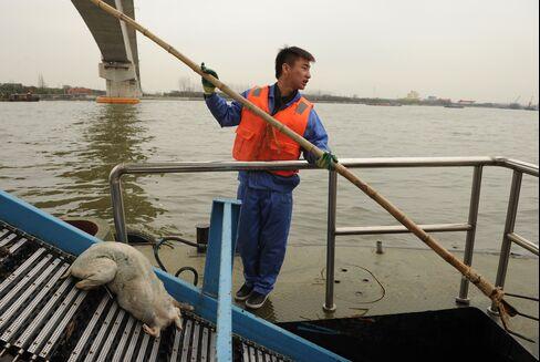 Shanghai Races to Clean River Where 2,800 Dead Pigs Were Found