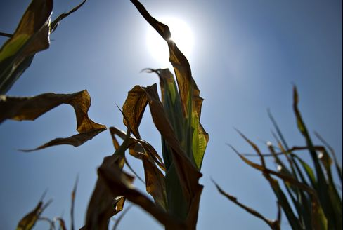 Crop Prices Drop After Surging to Record on U.S. Midwest Drought