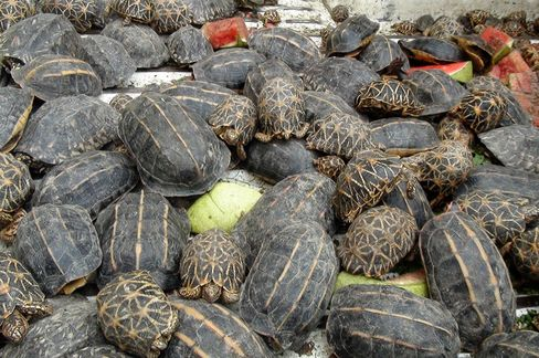 Tortoises Seized in Smuggling Attempt