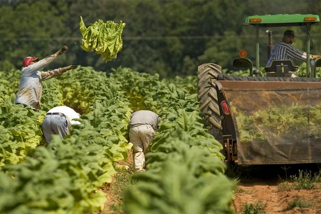 Yes, the money made in U.S. tobacco fields can be beneficial to people in Central America.
