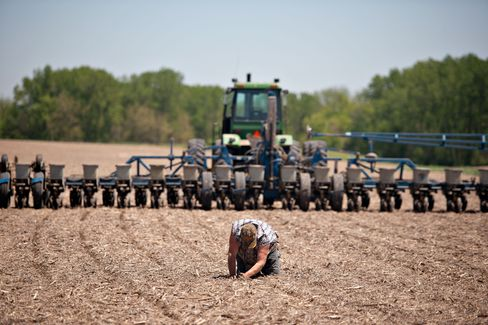 Corn Acreage Highest Since 1936 as Farmers Rebound From Drought