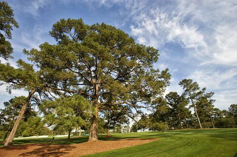 Eisenhower Tree at Augusta National