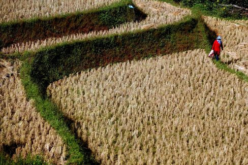 Asia Inflation Risk May Rise With Thai Plan to Boost Rice