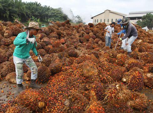 Felda Urges Tax-Free Palm Oil to Combat Reserves