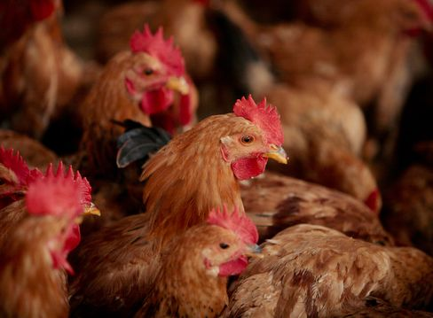 Chinese Asked to Change Eating Habits as H7N9 Infections Rise