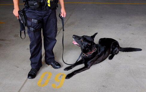 Colorado and Washington Police Allow Dogs to Ignore Marijuana