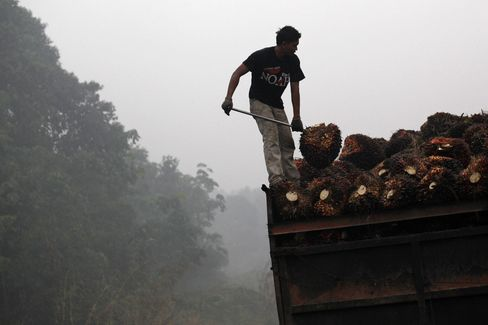 Wilmar to Cut Off Palm Oil Suppliers Caught Burning in Indonesia