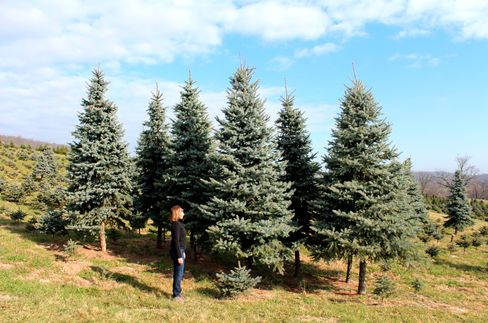 Citigroup Top Lobbyist Turns Christmas-Tree Seller for Holidays