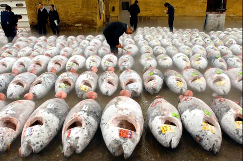 Bluefin Tuna Demand Lures Japanese Investors Chasing 7% Return