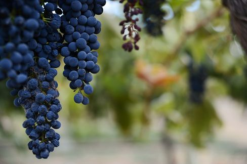 Treasury Wine Lifts 2008 Grange Price 15% as China Demand Rises