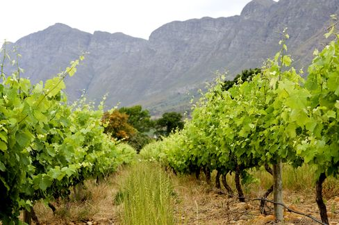 South African Wine Exports Setting Records on U.S., China Demand