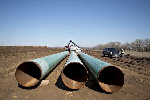 Beetle-Bedeviled Keystone Pipeline Needs Dead Rats to Let It Be