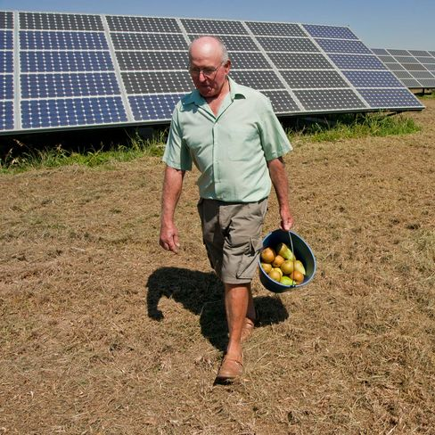 Jaume Vilimelis, a local farmer, walks away from his solar panels holding a bucket of pears in Lerida, Spain. Photographer: Adam Lubroth/Bloomberg Markets via Bloomberg