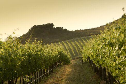 La Motte Estate Vineyard